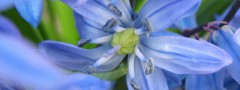 Blue Flowers : Vertical Image Slideshow