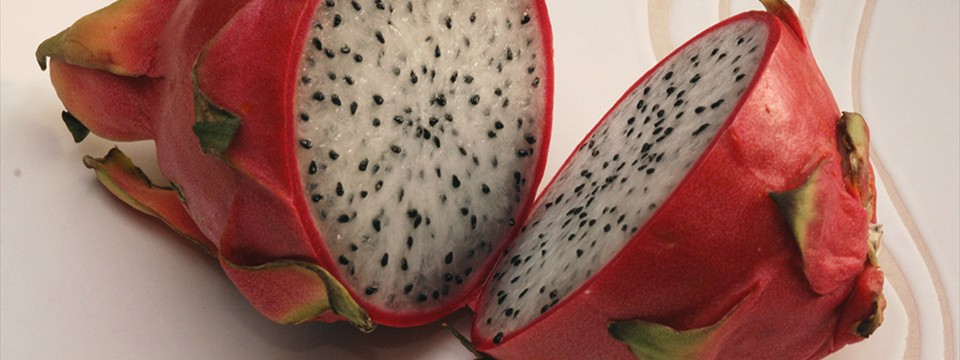 Dragon Fruit : Slideshow Ken Burns