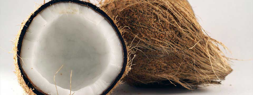 Coconut : Ken Burns Effect Slideshow