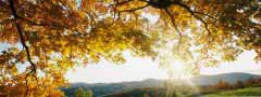 autumn_leaves jquery slider