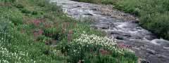 creek jquery slider