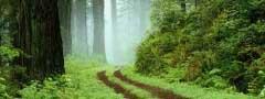 forest jquery slider