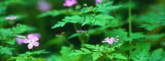 forest_flowers jquery slider