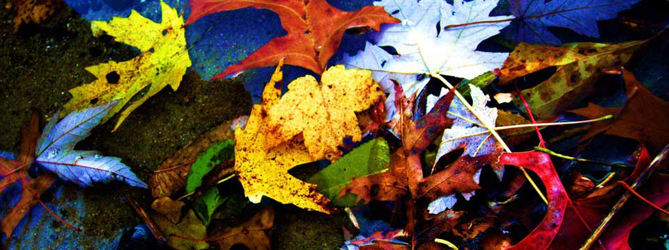 Leaves and Water free pluginautomatic for images free for your site