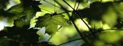 Leaf in Horten