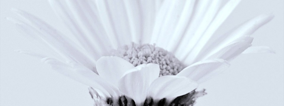 White Flower banner with image text free download alphabet range example