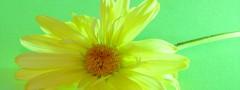 Flower on Green  Navigation