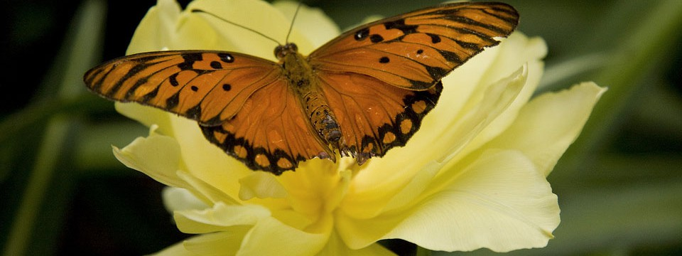 Beautiful butterfly : transparent video