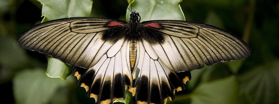 Dark butterfly : step to develop image