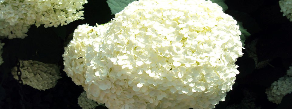 beatiful flowers jquery css slider