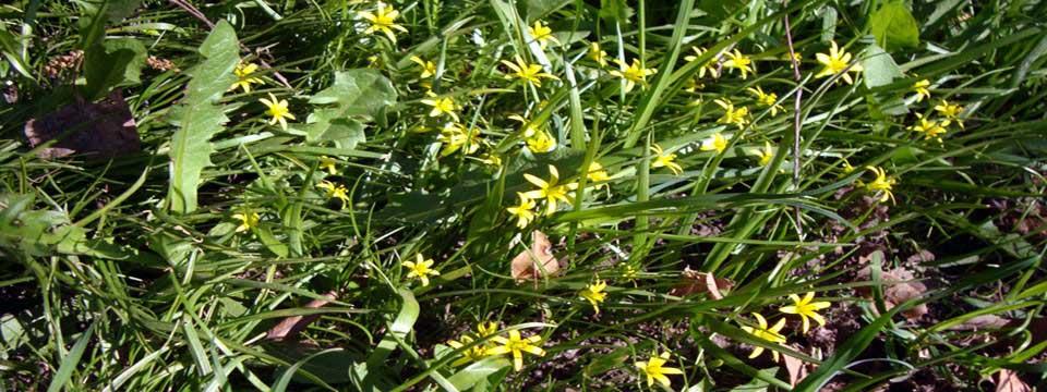spring flowers slider html css