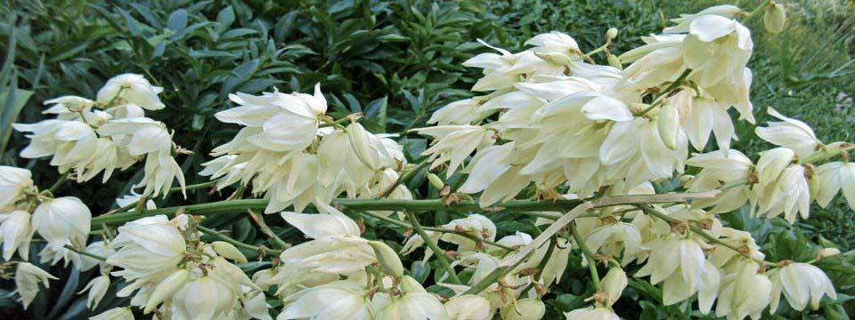 white flowers simple css based image slider