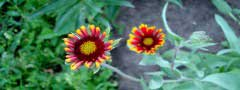 flowers slider css only