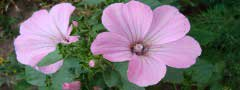 mallow download simple image using