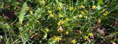 spring flowers jquery slider code