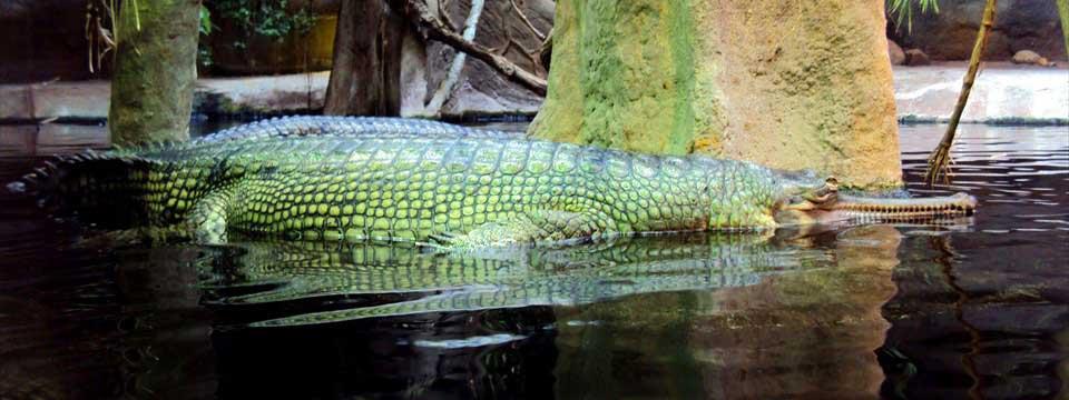 Alligator simple jquery banner rotator