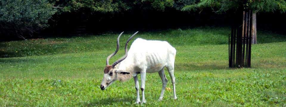 Antelope javascript banner rotator code