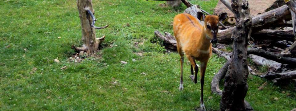 Deer jquery banner rotator free