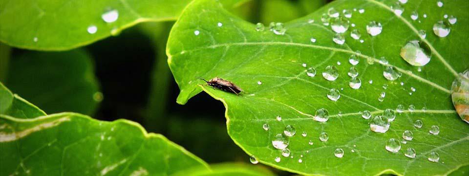 Bug and dewdrops simple javascript slideshow