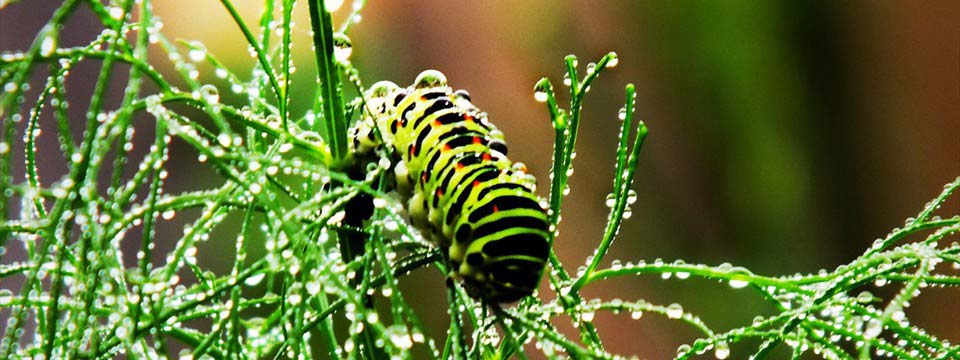 Bright caterpillar picture slideshow software