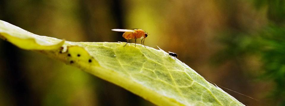 Two flies javascript picture slideshow