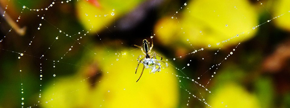 A spider makes a web code html slideshow images