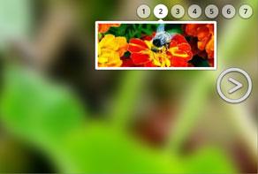 HTML slideshow for website