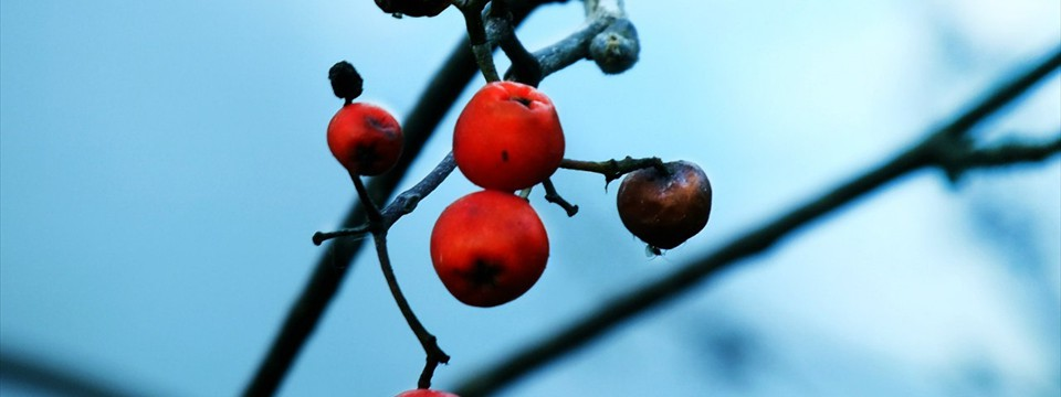 Frozen rowan berries jquery photo slider slider