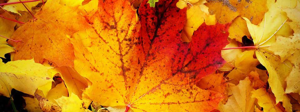 Bright autumn leaves javascript photo slider