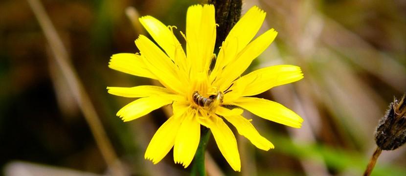 Flower jquery image slideshow