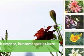 Free online photo slideshow generator