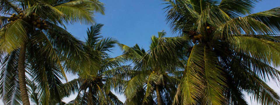 Palms and blue sky transparent buttons uploading online image