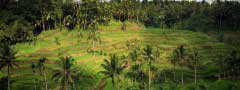 Palms image slideshow css