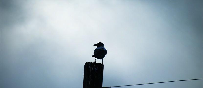 Raven source code for basic image free online banner