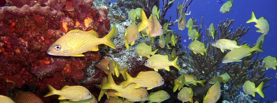 Yellow fish slideshow maker best software