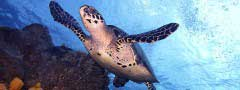 Sea turtle slideshow maker online