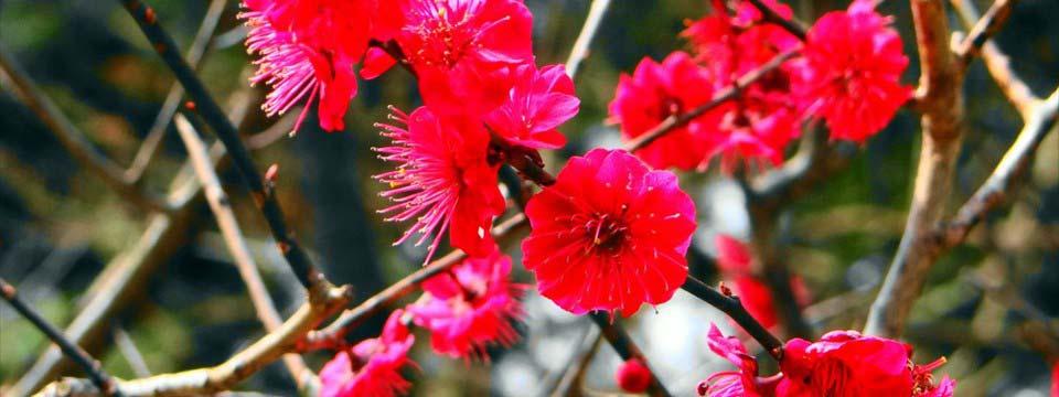 Pink flowers online banner maker software