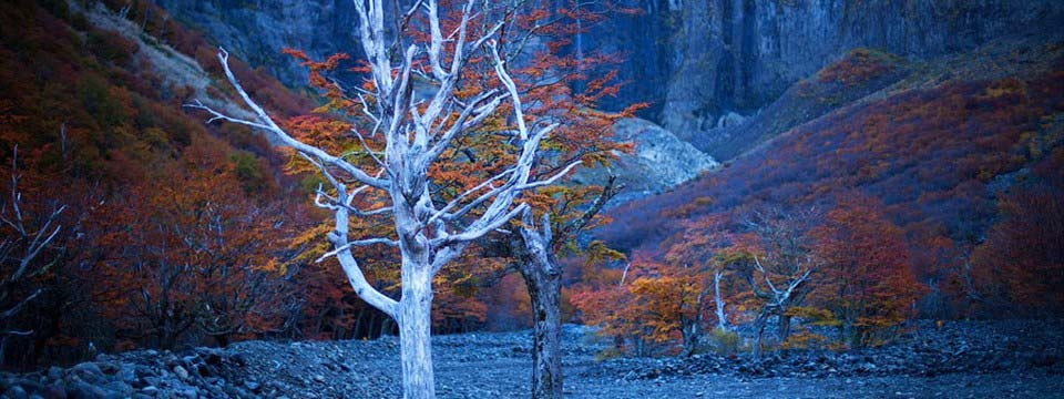 Autumn trees css3 image slider