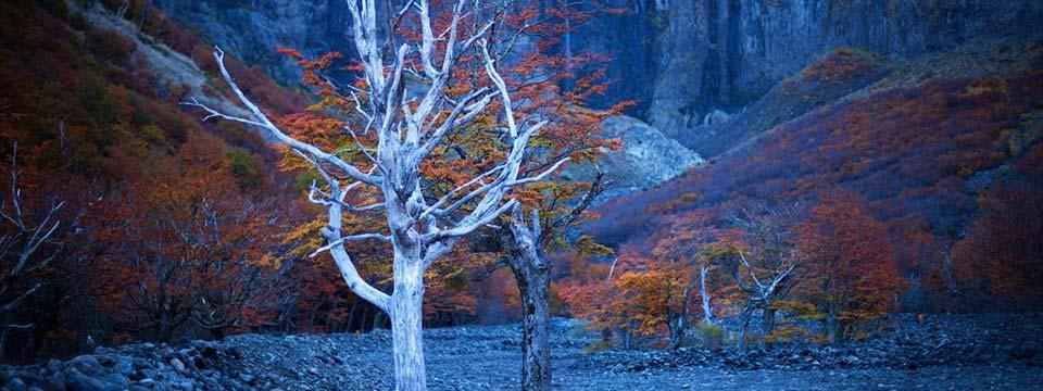Autumn trees css3 image slider