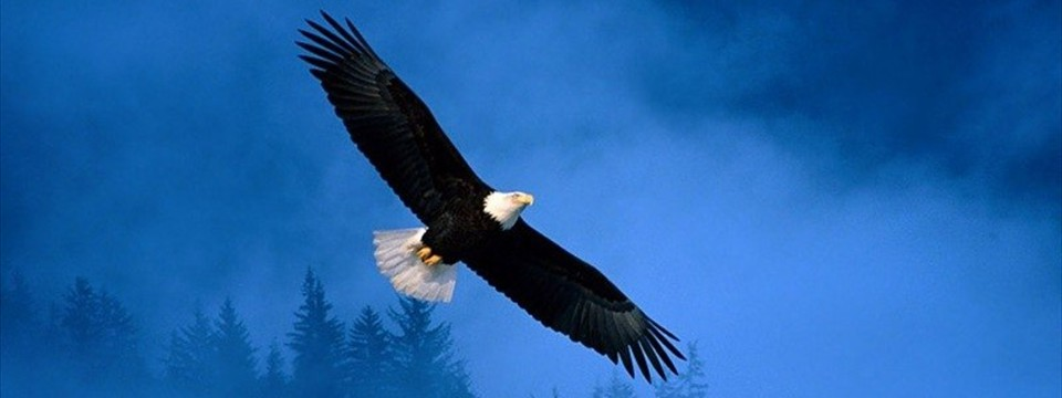 Bald eagle: HTML5 image slideshow