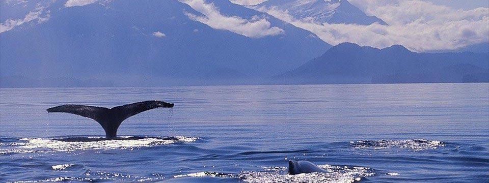 Whale's tail: html5 slideshow wordpress