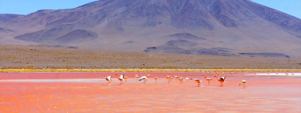 Flamingo in the Red lake html5 image gallery slider