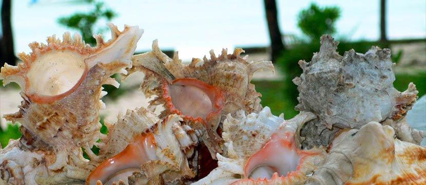 Seashells slideshow jquery free