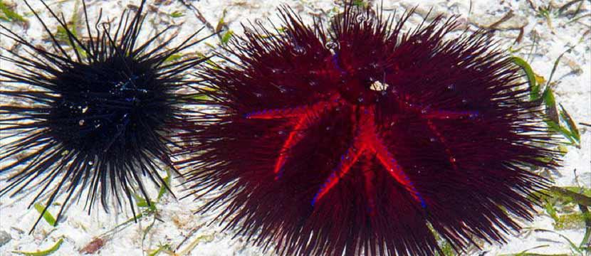 Urchin slideshow image jquery