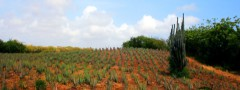 Aloe Vera plantation free with for wordpress