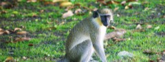 Monkey software slideshow photo>