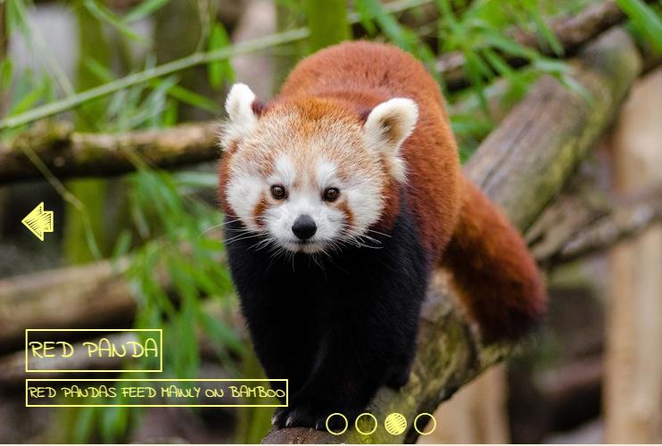 slideshow html