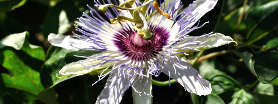 Flower image gallery slider