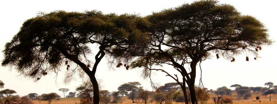 Acacia Tanzania Slideshow Creator Online