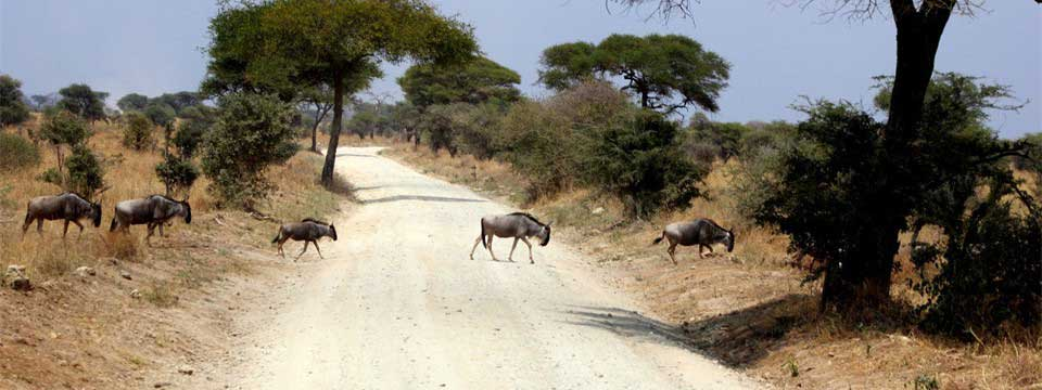 Wildebeests free slideshow creator